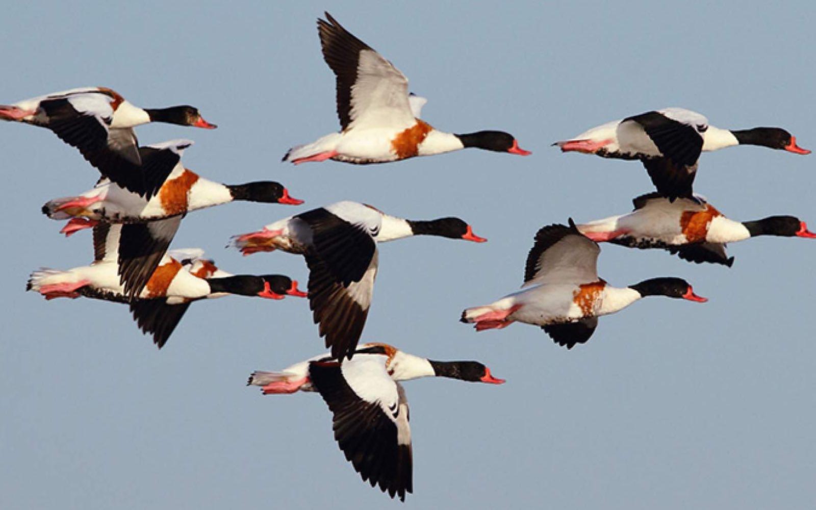 Öland er turister, historie og millioner av fugler