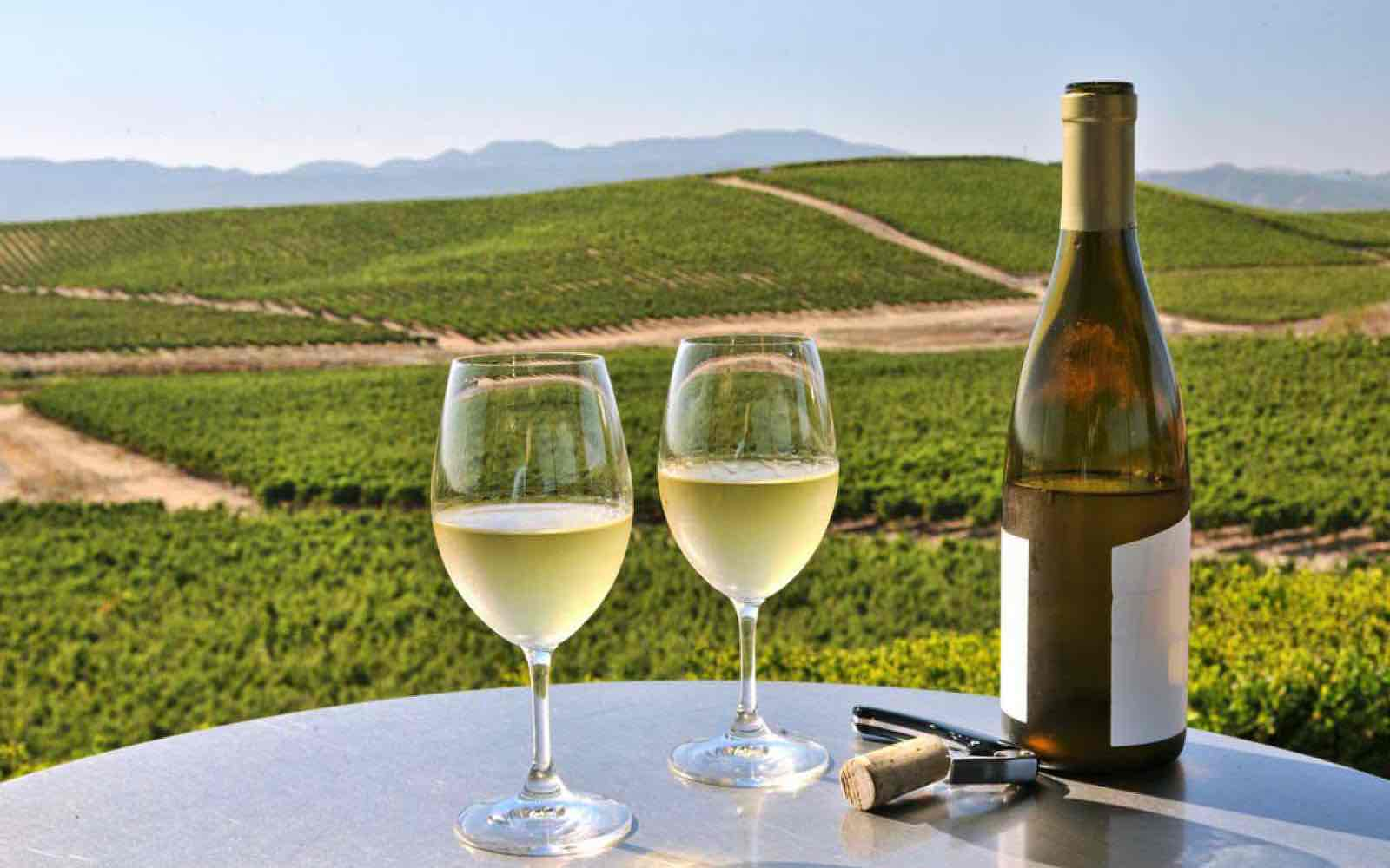Ut på den store vin-reisen i Napa Valley