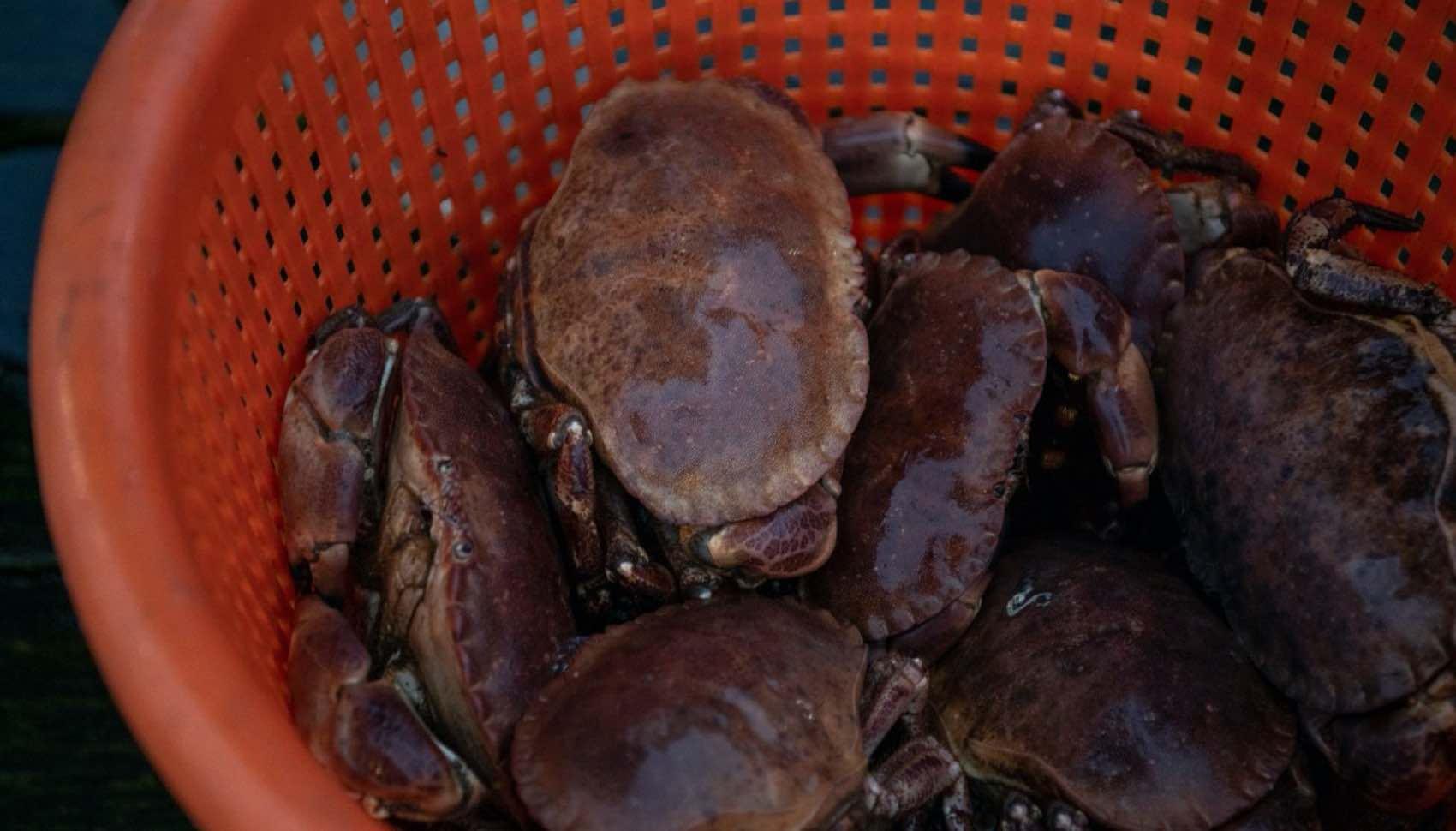 Spør etter fersk krabbe fra fiskebyen Gilleleje