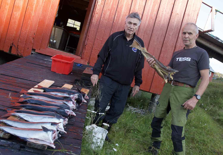 Fisk: Mens Ole fileterer fersk sei, viser Frank frem sin tørrfisk, som vannes i en uke og dermed klar til bruk.